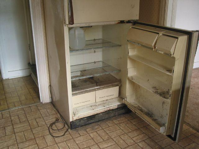 refrigerator mold
